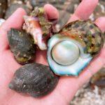 屋久島生活×移住生活《驚き》一湊の磯は海の幸が豊富です